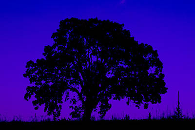 Photograph - Neon Tree by Joel Witmeyer