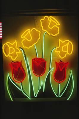 Rockville Photograph - Neon Tulips And Irises Brighten by Stephen St. John
