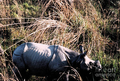 Rhinoceros Mixed Media - Nepal Rhino In The Wild by First Star Art