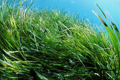 Neptune Grass Art Print by Alexis Rosenfeld