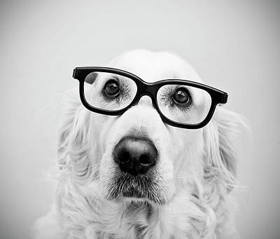 White Dogs Photograph - Nerd Dog by Thomas Hole