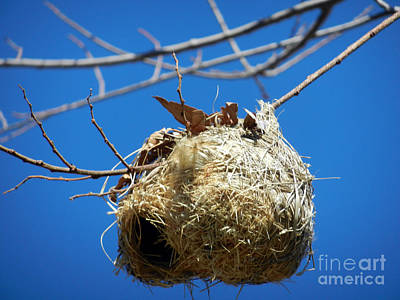 Photograph - Nest For Rent by Alexandra Jordankova