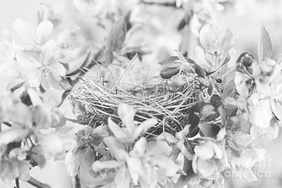 Nest In Black And White Print by Stephanie Frey