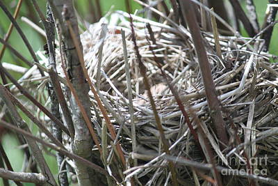Photograph - Nest by Terri Thompson