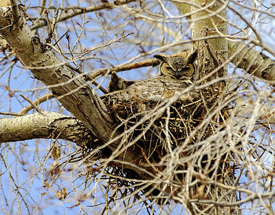 Art Print featuring the photograph Nesting Owl  by Stephen  Johnson