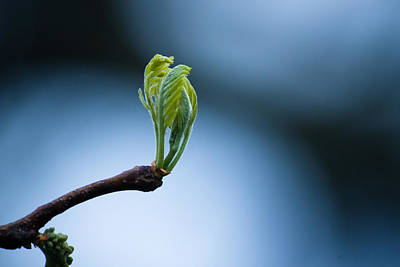 Unfurled Photograph - New Beginnings by Daniel Chen