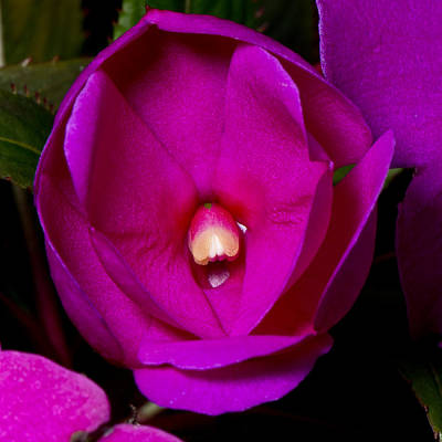 Photograph - New Bloom by Jeffrey Swank