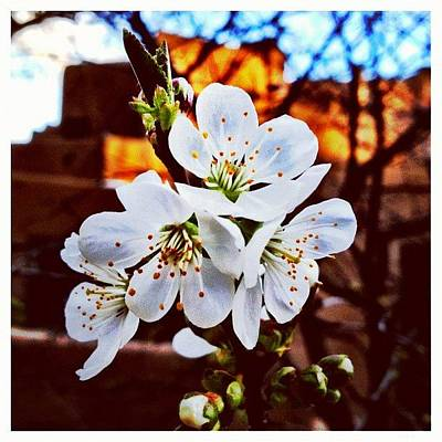 Fineart Photograph - New Blossoms by Paul Cutright