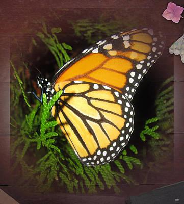 New Born Butterfly Art Print by Debra     Vatalaro