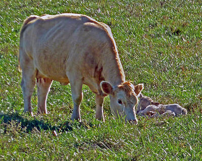 Photograph - New Born by Helen Haw