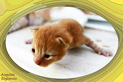 Yellow Cat Digital Art - New Born Kitten by Augusta Stylianou