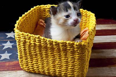 Photograph - New Born Kitten by Garry Gay