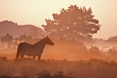 New Forest Pony In Mist At Dawn. Art Print by Julie Mitchell/Southdowns Photographics