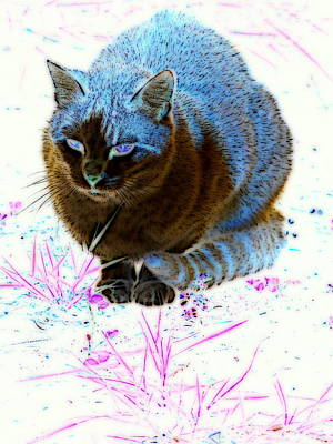 Digital Art - New Kitty Blue by Kathy Sampson