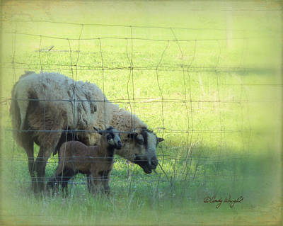 Photograph - New Life by Cindy Wright