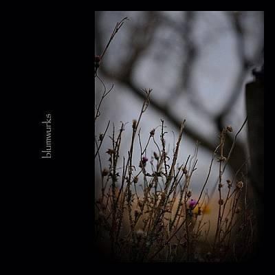 Nature_shooters Photograph - New Life by Matthew Blum