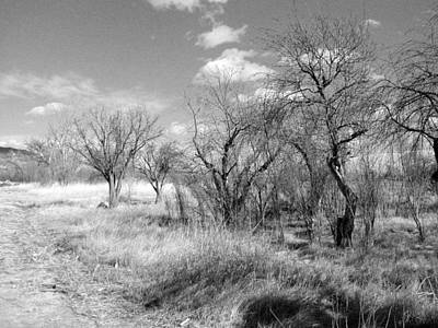 Photograph - New Mexico Series - Bare Beauty by Kathleen Grace