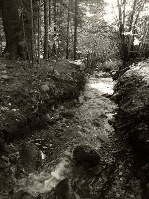 Photograph - New Mexico Series - Late Winter Streambed by Kathleen Grace