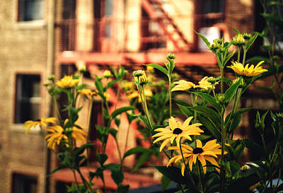 Black Eyed Susan Photograph - New York City Flowers Along The High Line Park by Vivienne Gucwa