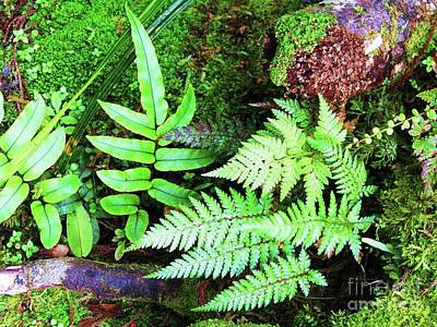 Photograph - New Zealand Ferns by Michele Penner