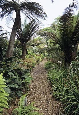 Heligan Photograph - New Zealand Walk At Heligan Gardens by Adrian Thomas