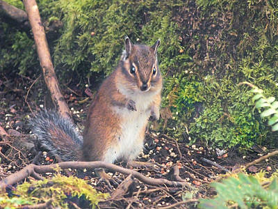 Photograph - Newport Squirrel by Wendy McKennon
