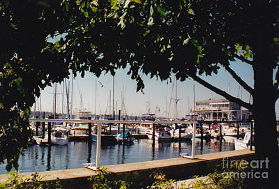 Photograph - Newport Yacht Club Marina by Barbara Plattenburg