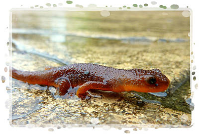 Photograph - Newt Edged by Cindy Wright
