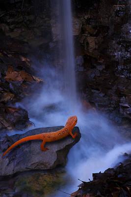 Salamanders Wall Art - Photograph - Newt Falls by Ron Jones