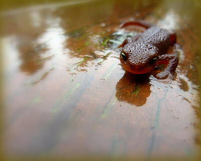 Photograph - Newt Slip N Slide by Cindy Wright