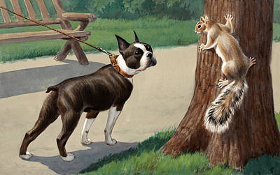 Boston Terrier Photograph - Ngm194311_582_vi, by National Geographic