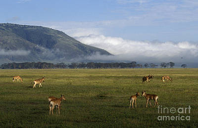 Photograph - Ngorongoro Crater - Tanzania by Craig Lovell