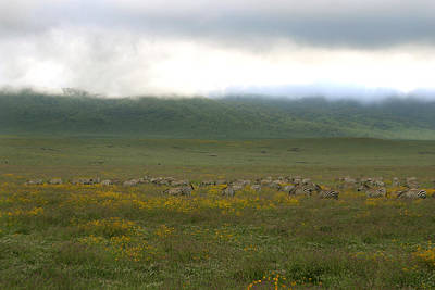 Photograph - Ngorongoro Crater by Joseph G Holland