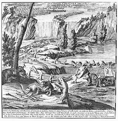Photograph - Niagara Falls, 1715 by Granger