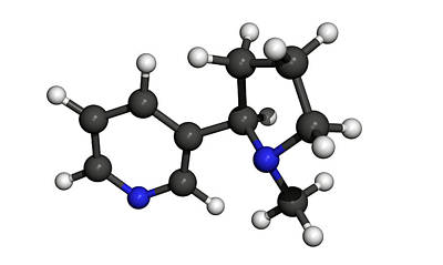 Nicotine Molecule Art Print by Friedrich Saurer