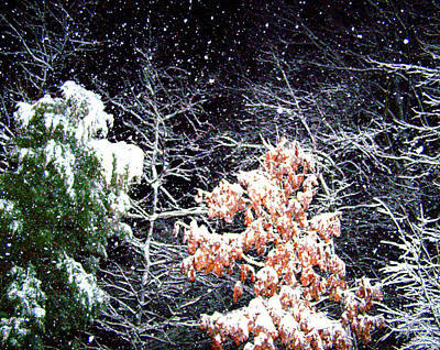 Night Snow 2 Art Print by Sandi OReilly
