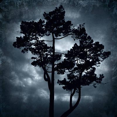 Night Tree Art Print by Svetlana Sewell