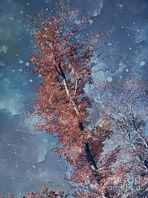 Photograph - Nighty Tree by Aimelle