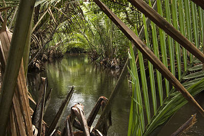 Kosrae Island Photograph - Nipa Palms Line A Channel by Tim Laman