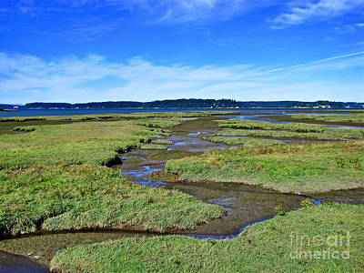 Nisqually Estuary At Low Tide Art Print by Sean Griffin