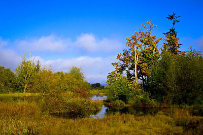 Photograph - Nisqually Wildlife Refuge P11 by David Patterson