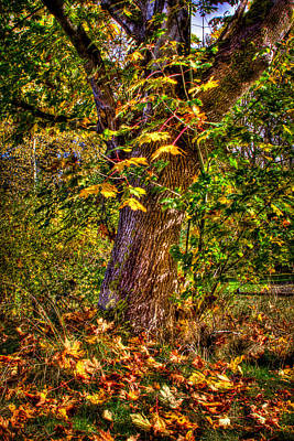 Photograph - Nisqually Wildlife Refuge P12 The Maple Tree by David Patterson