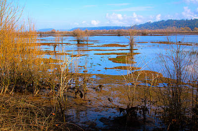 Photograph - Nisqually Wildlife Refuge P16 by David Patterson