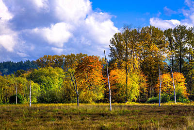 Photograph - Nisqually Wildlife Refuge P22 by David Patterson