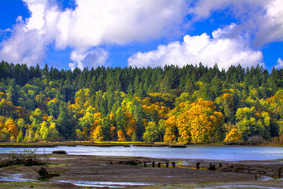 Photograph - Nisqually Wildlife Refuge P24 by David Patterson