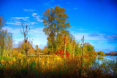 Photograph - Nisqually Wildlife Refuge P29 by David Patterson