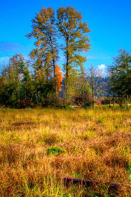 Photograph - Nisqually Wildlife Refuge P31 Twin Trees by David Patterson