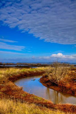 Photograph - Nisqually Wildlife Refuge P33 by David Patterson