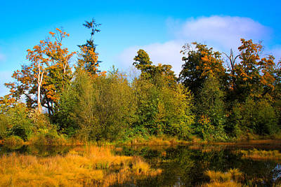 Photograph - Nisqually Wildlife Refuge P4 by David Patterson