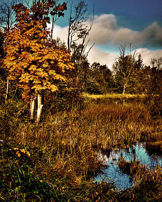 Photograph - Nisqually Wildlife Refuge P40b by David Patterson